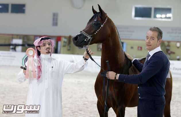الحصان القادم لساحات الامجاد مباهي الخالدية ومطلق بن مشرف بعد التتويج